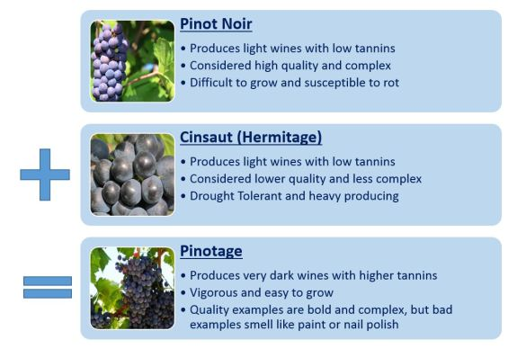 Pinotage Cross Breed Illustration
