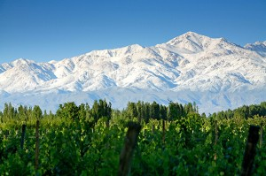 Snow-covered Andes Mountains and vineyards, near Tupungato, Mendoza Province, Argentina